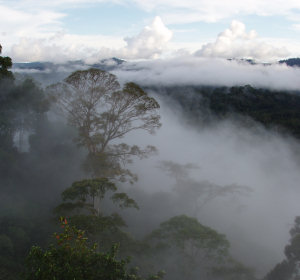 Mist over a tropical forest canopy after a storm on Borneo