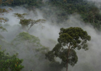 View of the forest from the Bukit Atur GAW tower